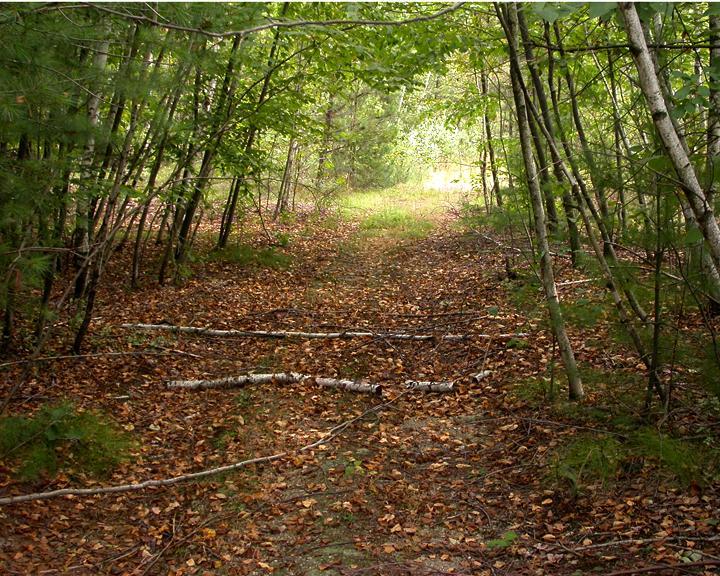 Walden woods project