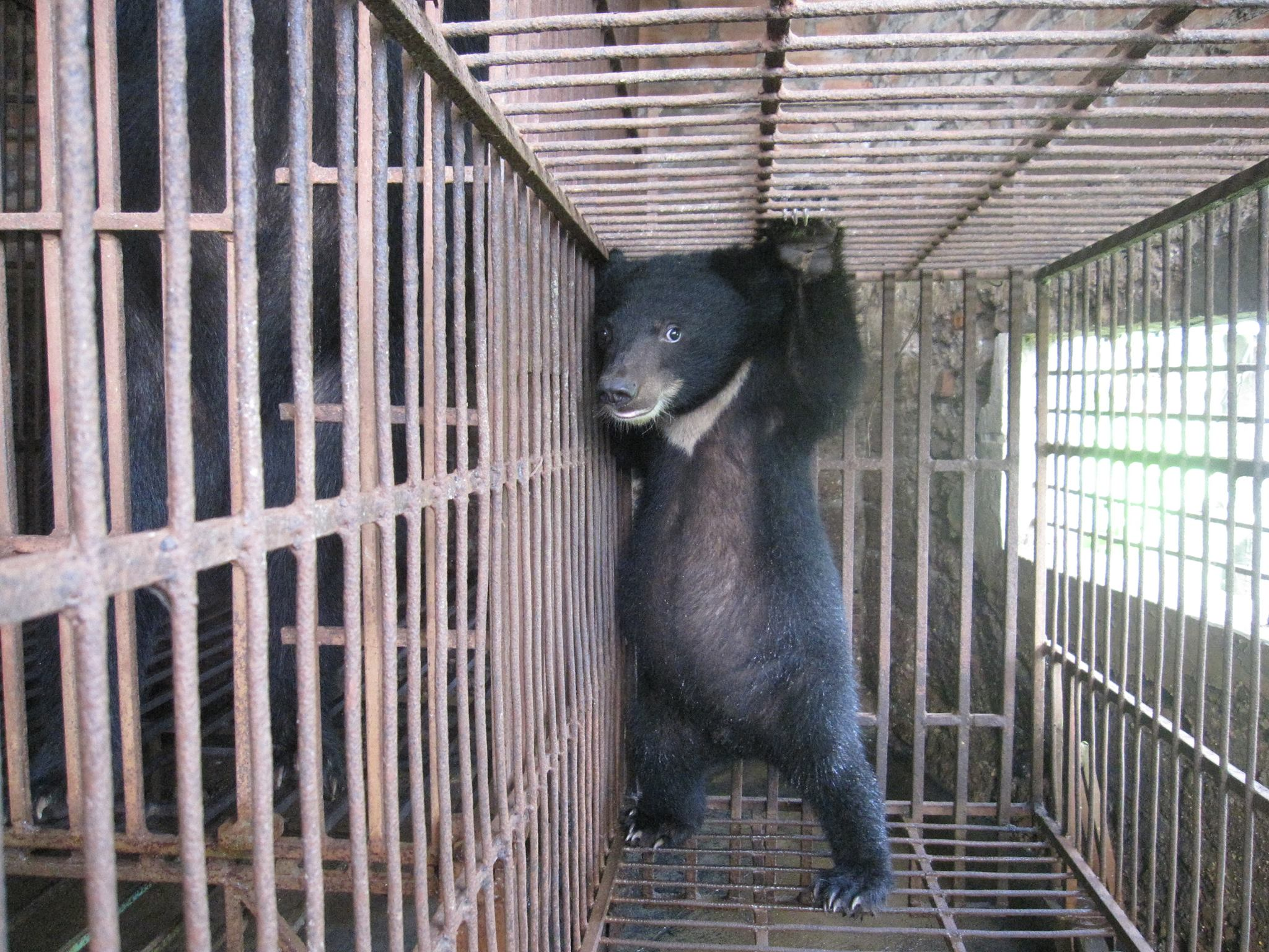 World Animal Protection Reviews And Ratings New York
