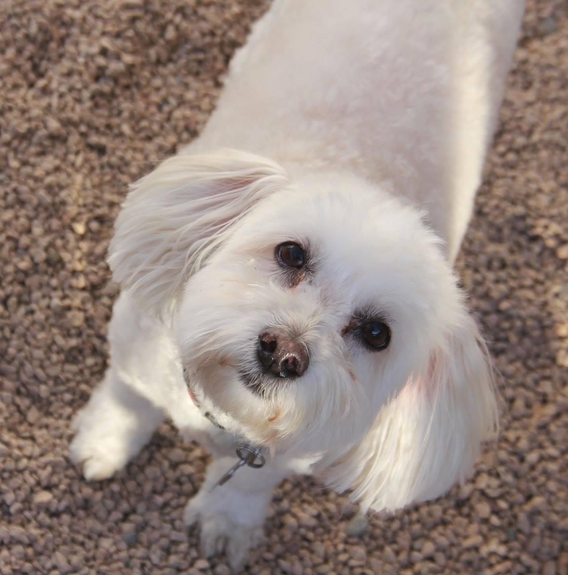 Arizona Small Dog Rescue Nonprofit In Phoenix Az