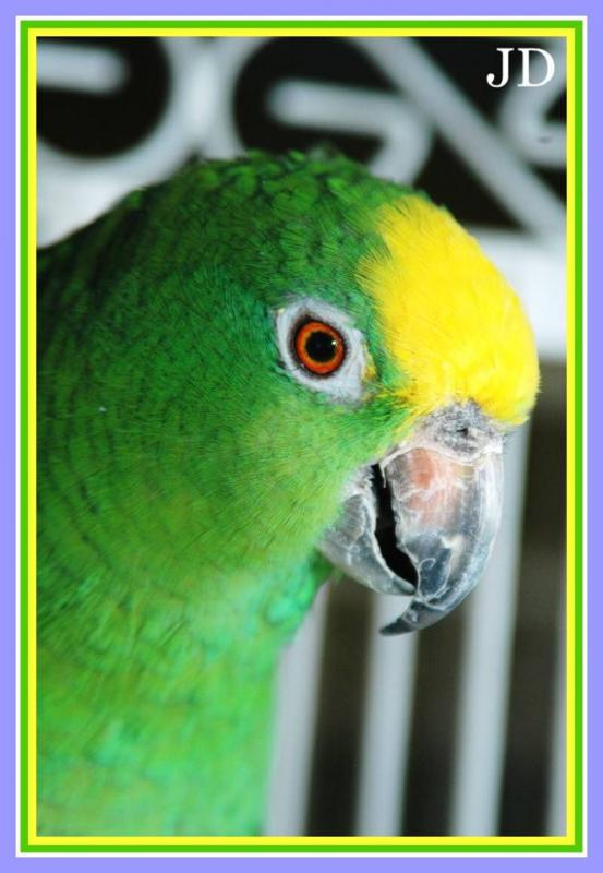 Feathered Sanctuary Exotic Bird Rescue Reviews and Ratings