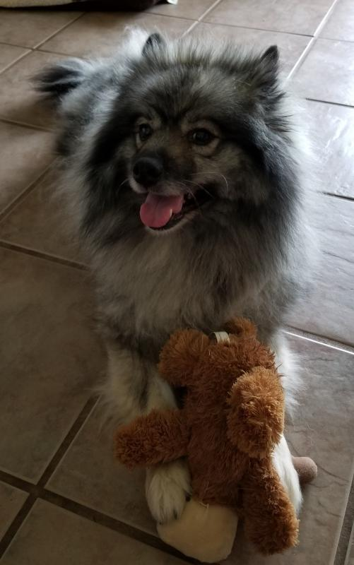 Keeshond Sunshine Rescue Foundation Reviews and Ratings ...